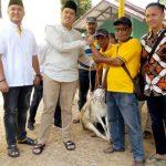 DPD Golkar Kab Cirebon Bagikan 3 Sapi dan 40 Kambing